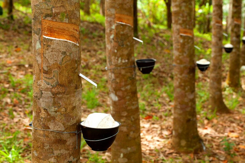 Sustainable Raw Materials Is Rubber Finally Catching Up