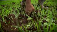 HEINEKEN CREATE-s local sourcing opportunities in Ethiopia, Rwanda and Sierra Leone