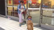 Service Dog SSD Bridge Opens Doors