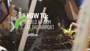 JetBlue's T5 Farm