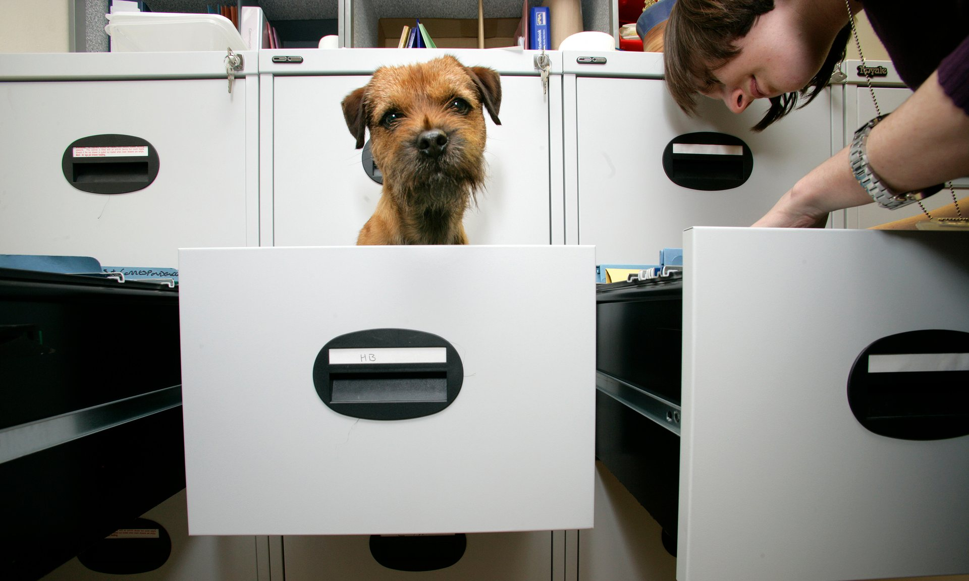 e3db74f79 Paws for Thought  Why Allowing Dogs in the Office is a Good Idea ...