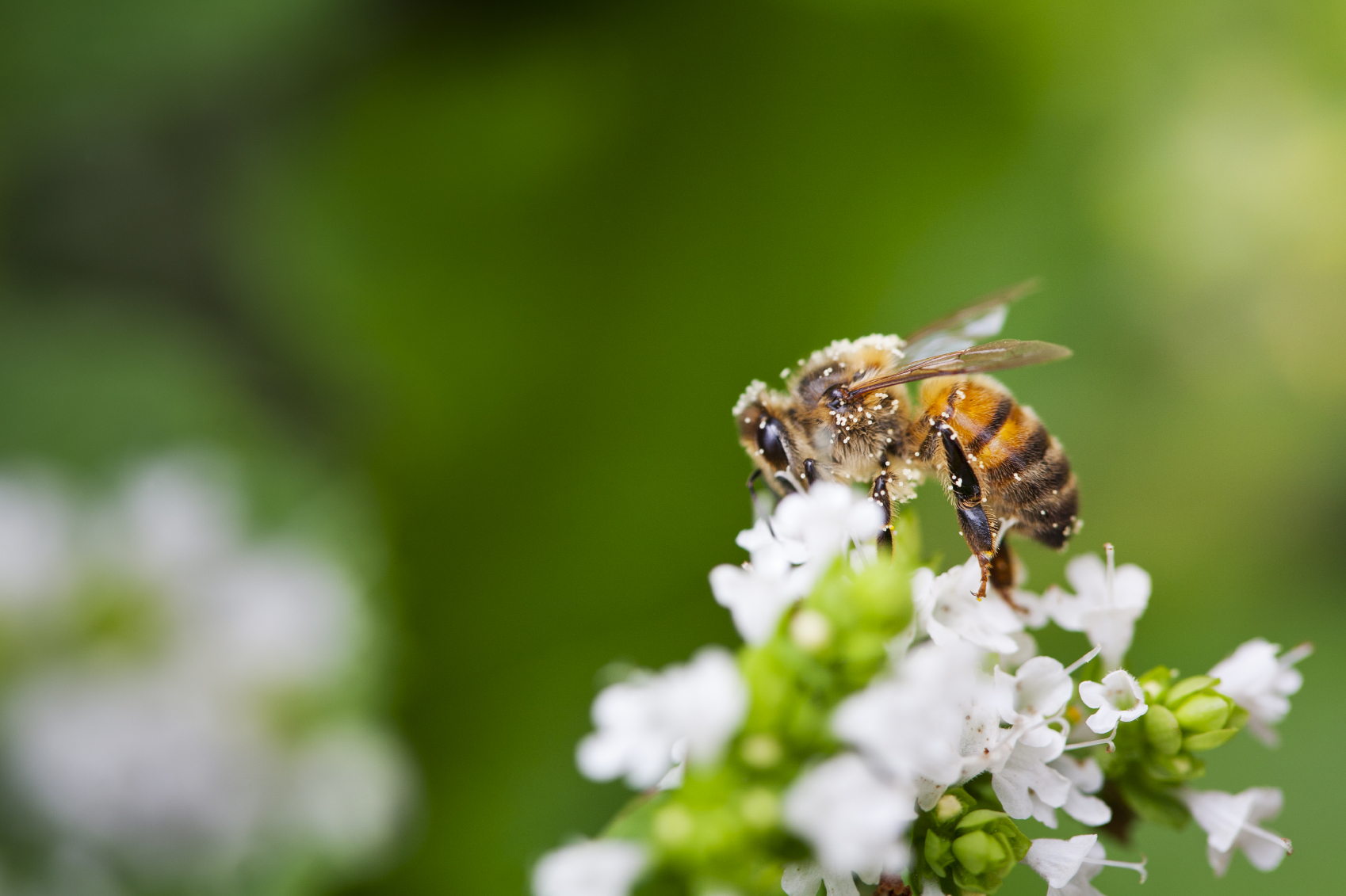 ede9eae4590 From Friends of the Earth   the Pesticide Research Institute  New Report  Highlights Strategies to Move Garden Industry in Bee-Safe Direction