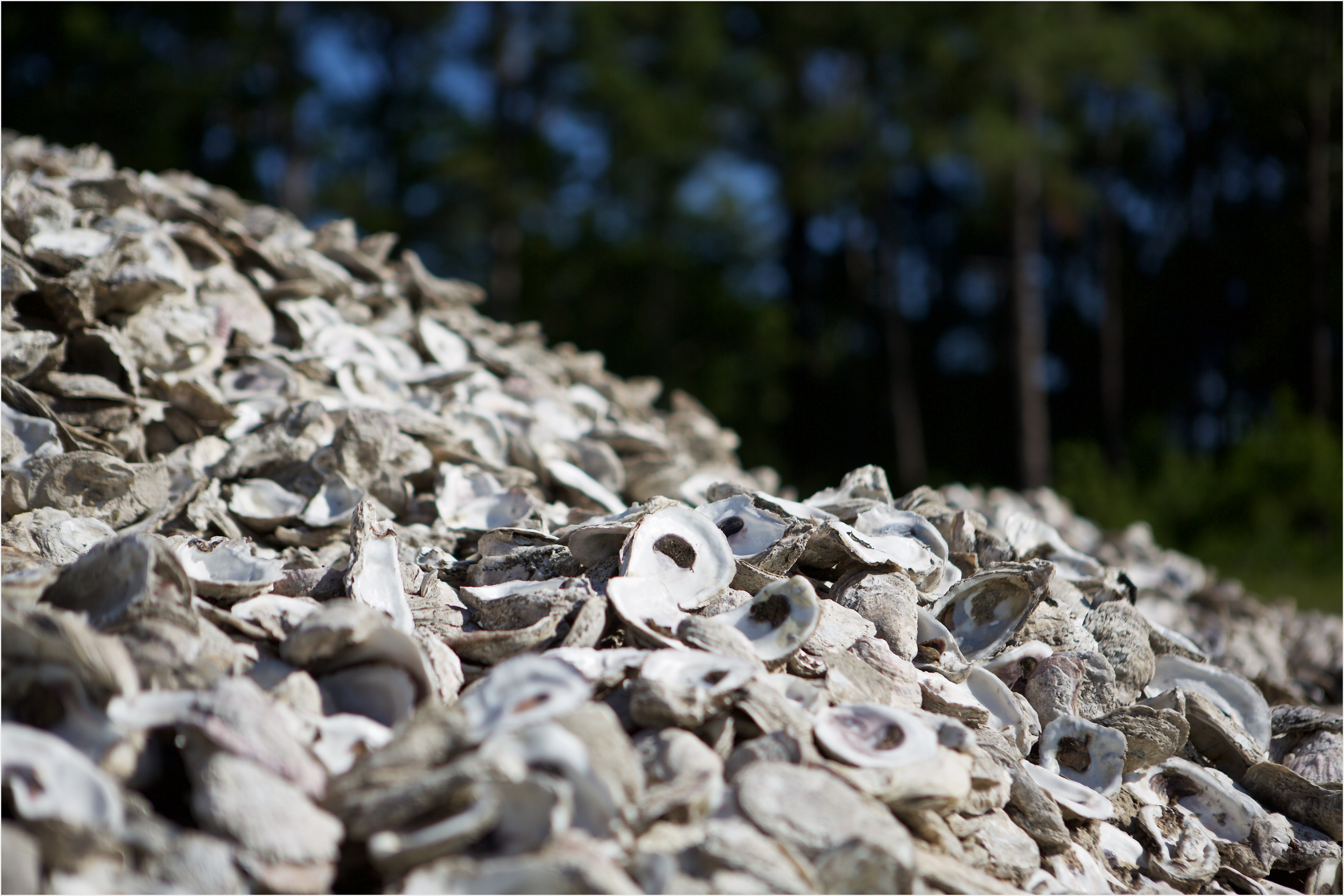 First Of Its Kind Oyster Shell Recycling Program