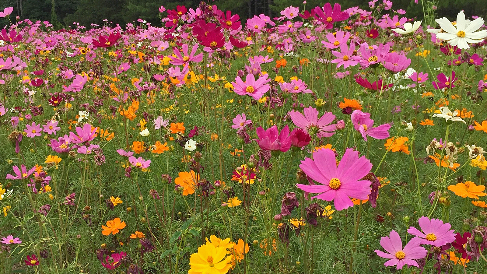 Keep mississippi beautifuls wildflower trails are taking bloom keep mississippi beautifuls wildflower trails of mississippi initiative is showering the state with color izmirmasajfo