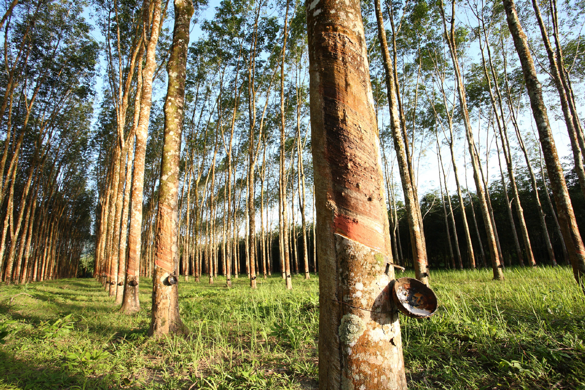 General At Tires >> GM Drives Demand for Sustainable Natural Rubber | 3BL Media