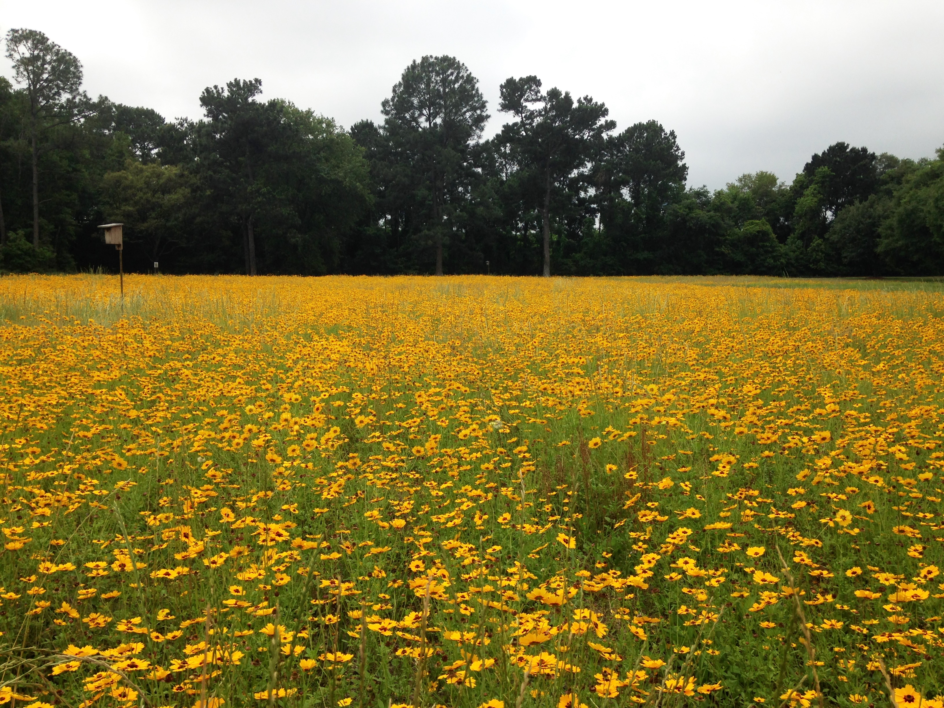Meadow supply chains. What animals and plants are common in the meadows 65