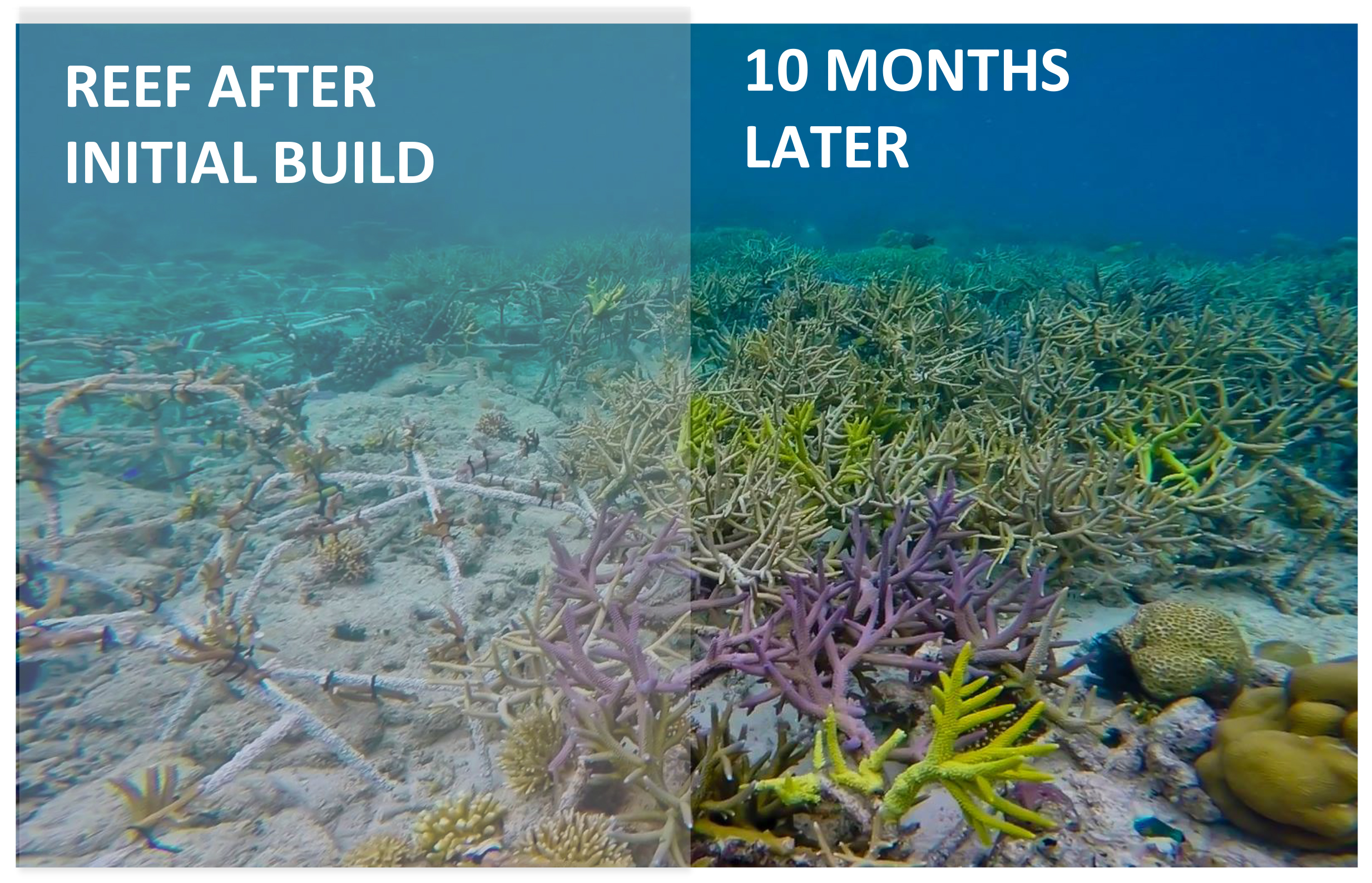 why should we conserve our coral reefs before its too late Before we can start  the clock is ticking for many of our planet's coral reefs, and we are at a very real risk of  it may be too late for some reefs in.