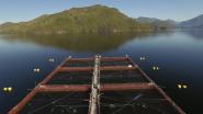 Salmon Farming: The Bigger Picture