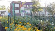 Business Leaders Propel Sustainable Urban Agrihood in Detroit